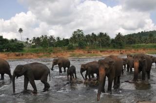 Large_srilanka2